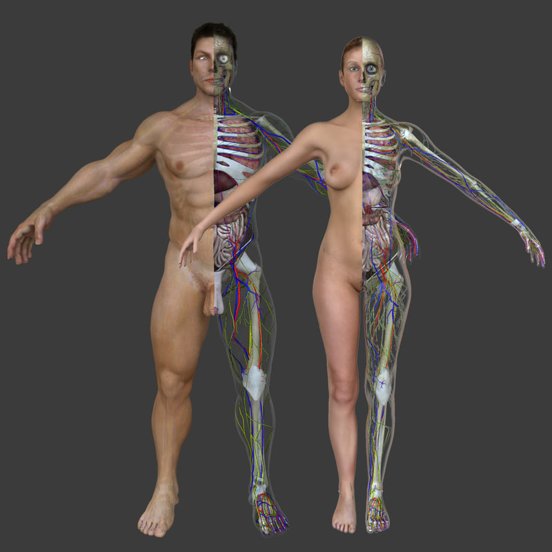 3d Male Female Body Anatomy