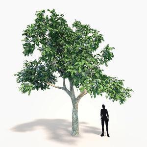 3ds max catalpa tree