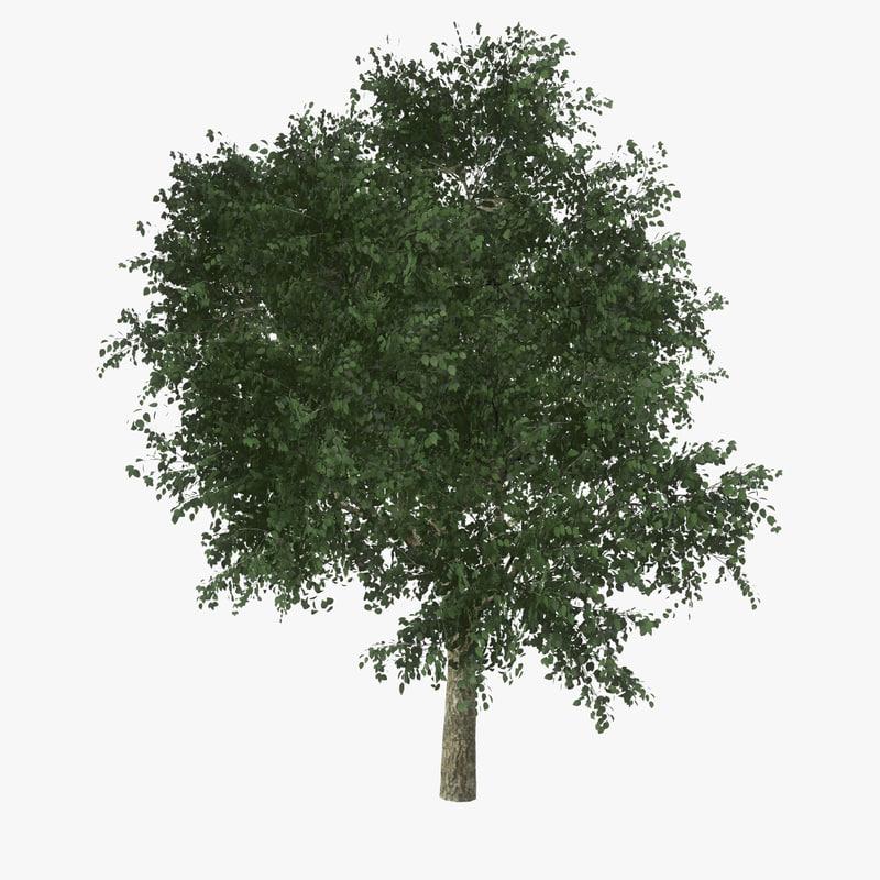 realtime catalpa tree leaves max