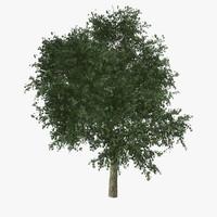 Catalpa Tree Lowpoly