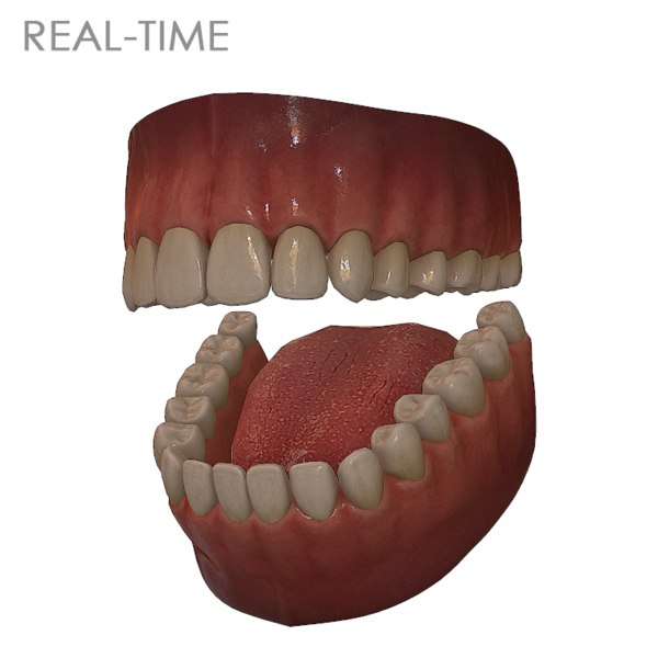 3d model teeth tongue