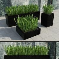 3d modern plants 2 model