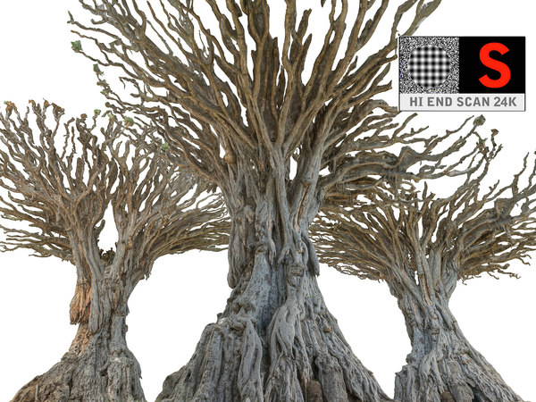 dragon tree old 3d model
