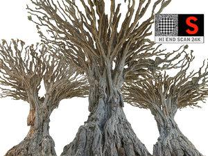 dragon tree old 3d model