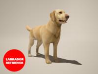 3d dog labrador