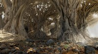 dragon forest 3d max