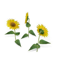 Low polygon sunflower