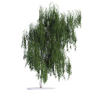 3d birch tree seasons model