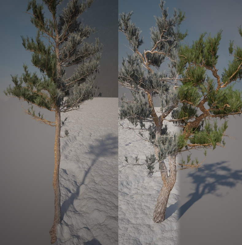 realistic pines summer winter 3d model