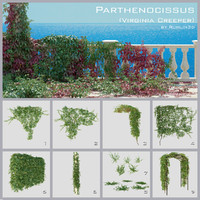 Parthenocissus (Virginia Creeper)