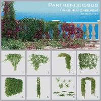 parthenocissus virginia creeper max