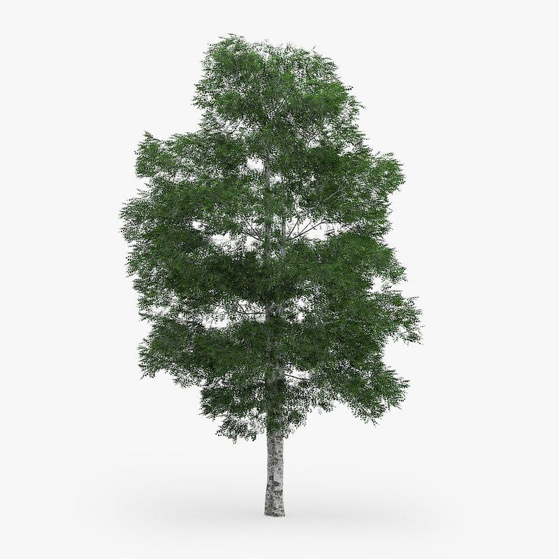downy birch 11 1m 3d model