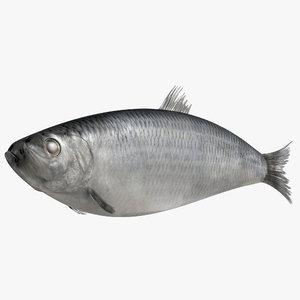 3dsmax herring fish