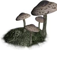 Realistic Mushroom (detailed)