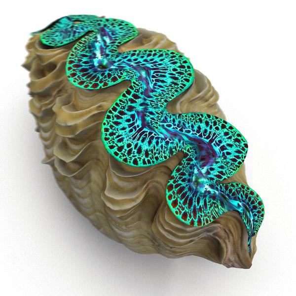 tridacna maxima clam 3d max