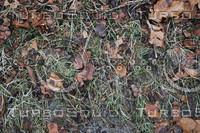 Ground_Texture_0013