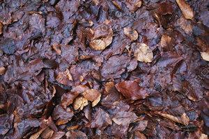 Ground_Texture_0019