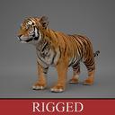 Tiger Cub 3D models