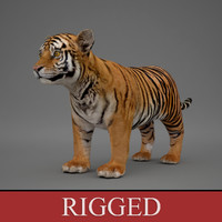 Baby Tiger (Rigged)