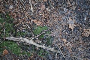Ground_Texture_0026
