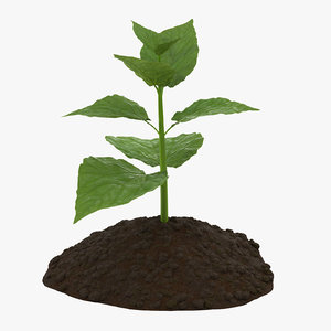 3d plant sprout model
