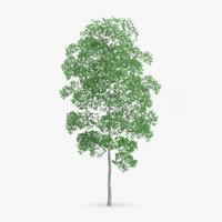 white birch 19 4m 3d max