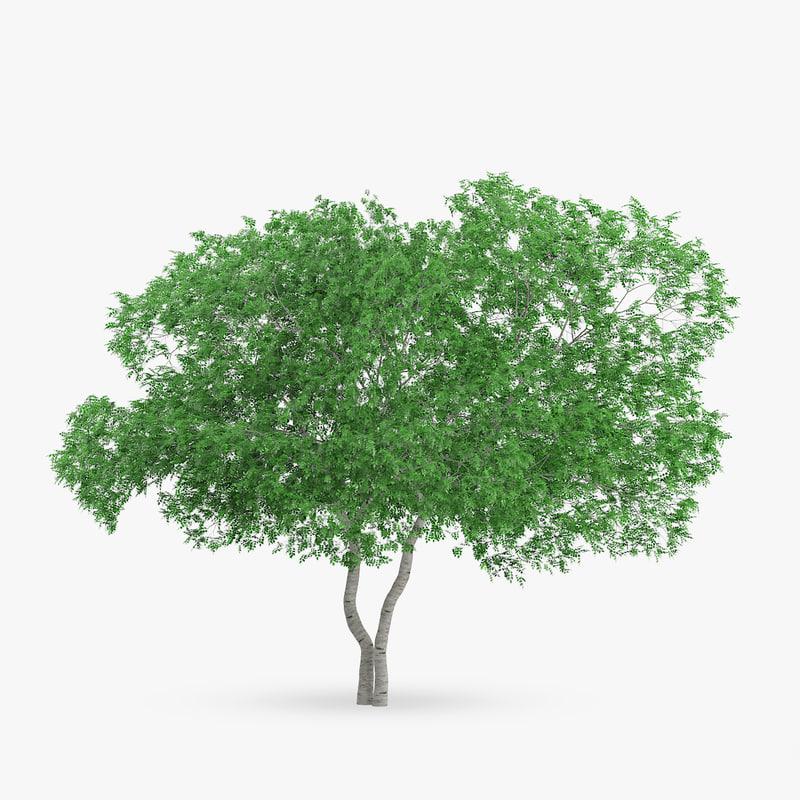 3d white birch 9 2m