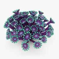 Poritidae Coral (Animated)