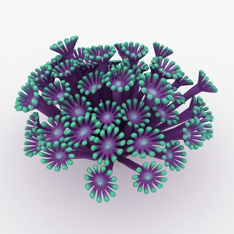 poritidae coral animation 3d max