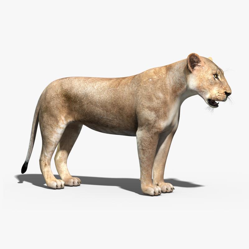 lioness rigging fur 3d max