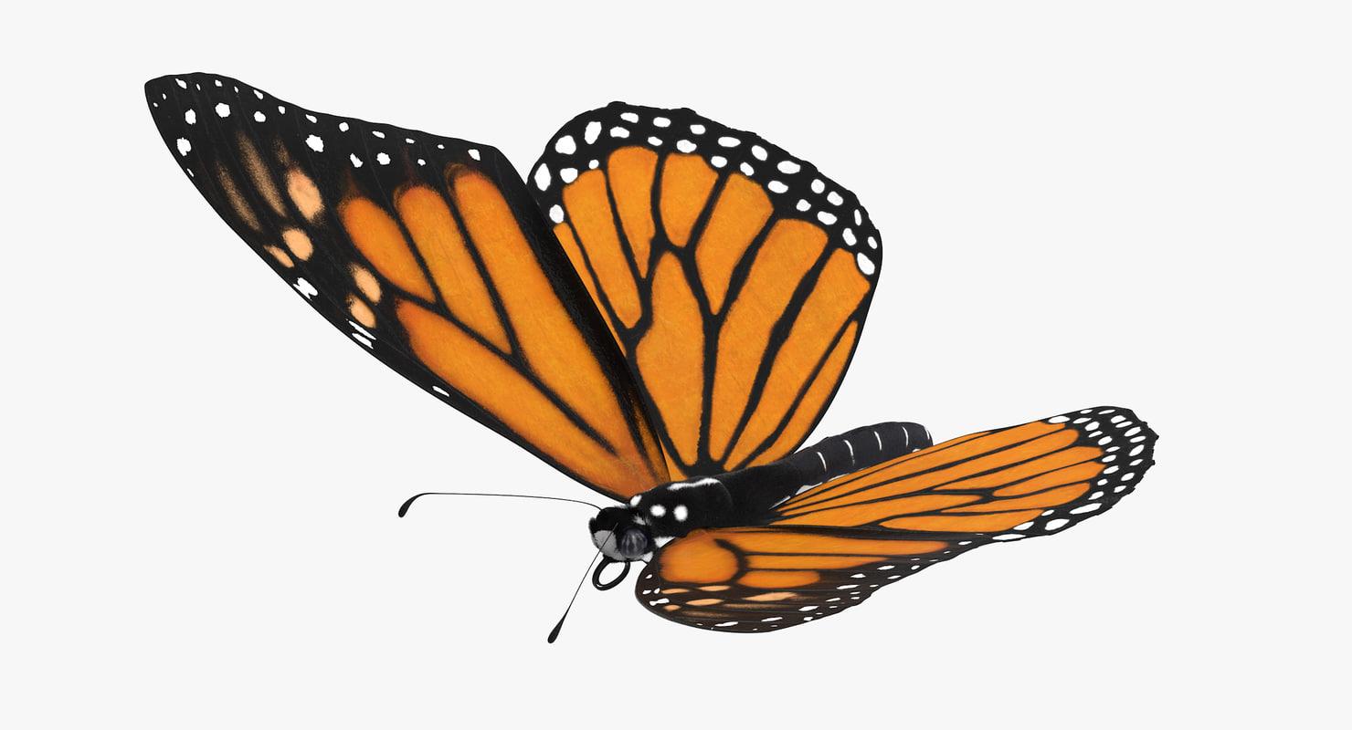 monarch butterfly flying 3d model