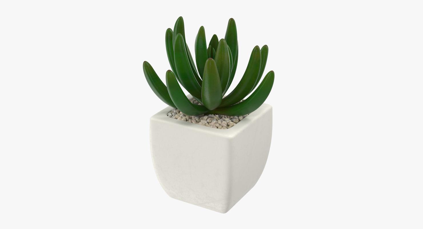 3d succulent 01 model