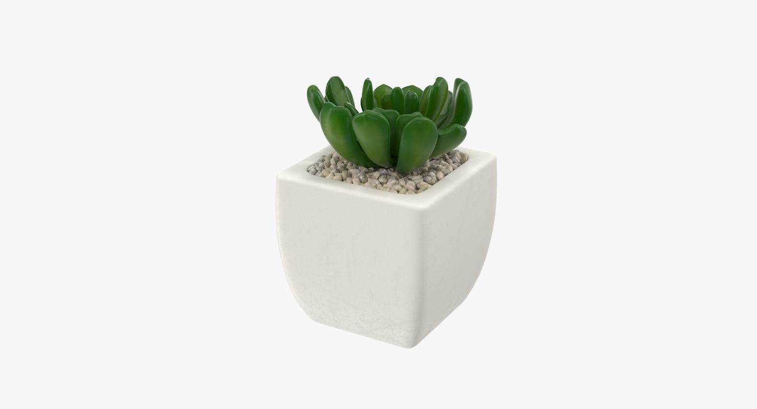 succulent 02 3d model