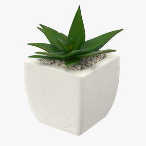 succulent 04 3d obj