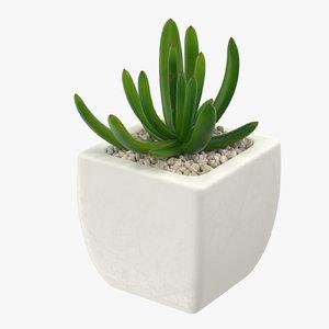 succulent 07 3d max