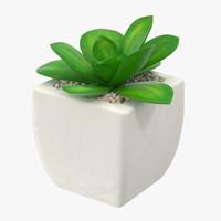 max succulent 12