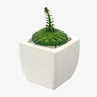 3d model succulent 13