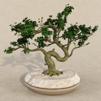 bonsai realistic 3d model