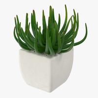 Succulent 06