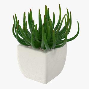 succulent 06 max