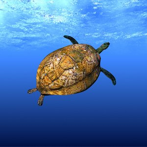 sea turtle 3d lwo
