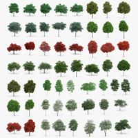 60 Trees Collection