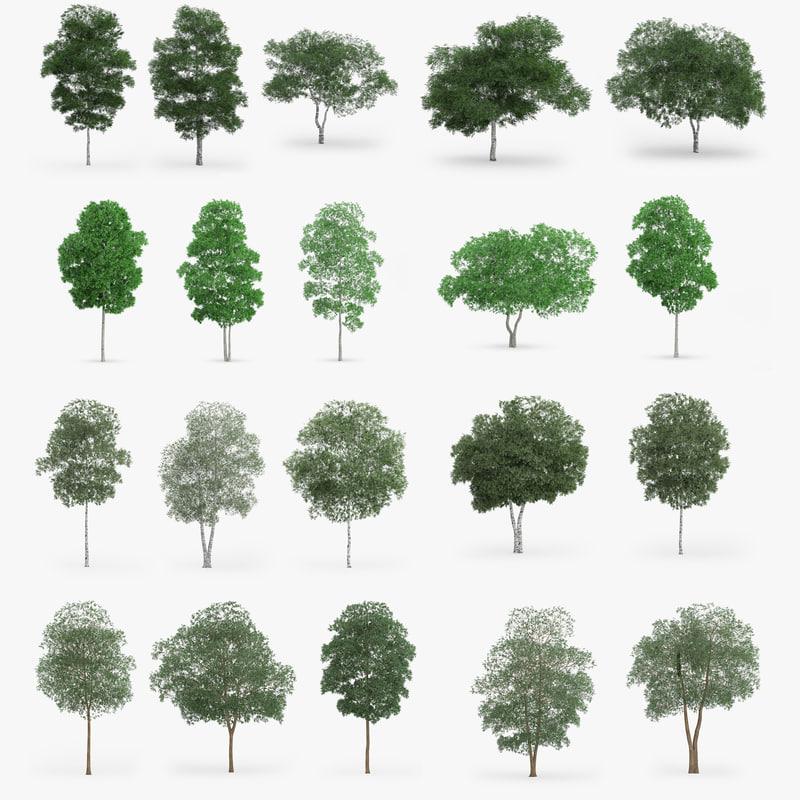 birch trees obj