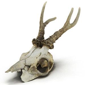 deer skull 3ds