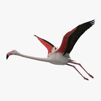 phoenicopterus roseus greater flamingo obj