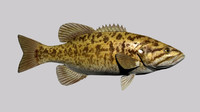 3d smallmouth bass rigged model