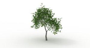 apple tree max