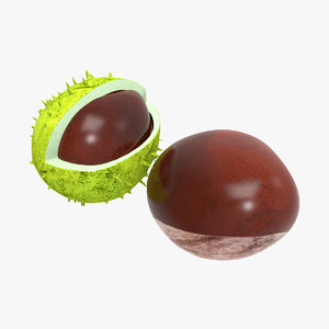 chestnut modelled 3d model