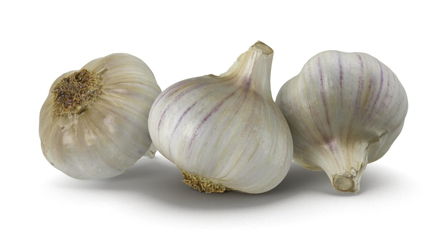 garlic bulb 3d model