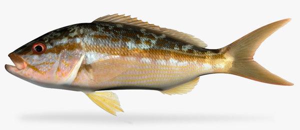 yellowtail snapper 3d x